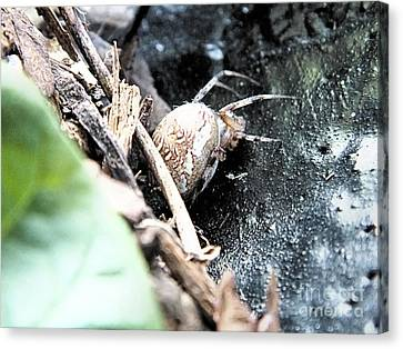 Mother Spider Canvas Print
