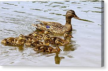Mothers Day Canvas Print by Susi Stroud