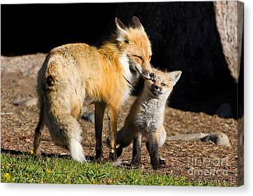 Mothers Love Canvas Print by Danny  Nestor