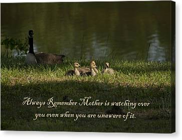 Mother's Watchful Eye Canvas Print by Kathy Clark