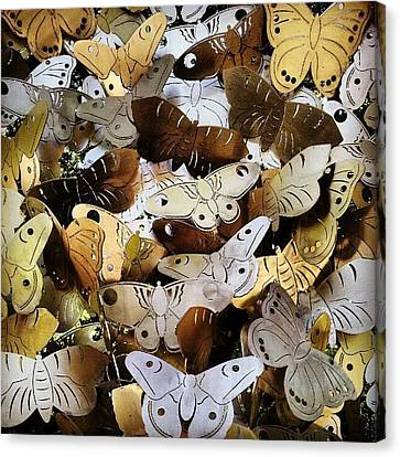 Moths Canvas Print by Natasha Futcher