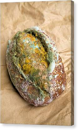 Mouldy Bread Roll Canvas Print