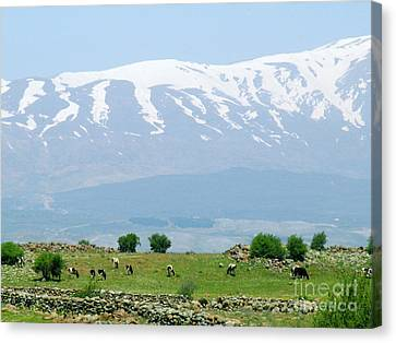 Mount Hermon Canvas Print by Issam Hajjar