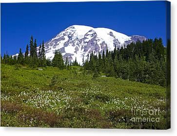 Mount Rainier In Summer Canvas Print by Sean Griffin