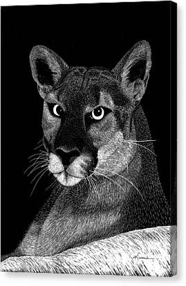 Mountain Lion Canvas Print by Kume Bryant