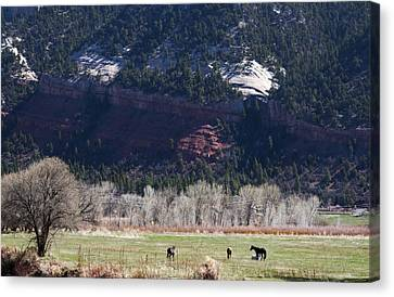 Canvas Print featuring the photograph Mountain Pasture by Lorraine Devon Wilke