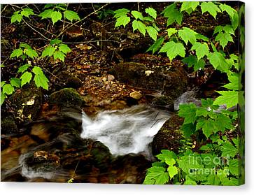 Mountain Stream In Spring Canvas Print by Thomas R Fletcher