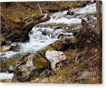 Canvas Print featuring the photograph Mountain Stream by Les Palenik
