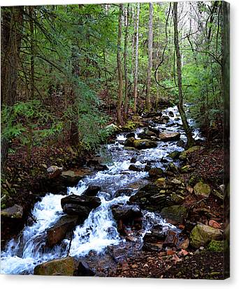 Mountain Stream Canvas Print by Paul Mashburn