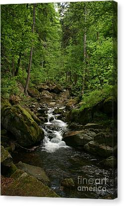 Mountain Stream Canvas Print by Torsten Dietrich