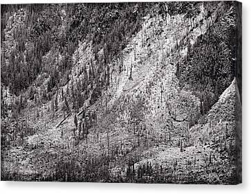 Mountainside At Hayden Valley Yellowstone Canvas Print by Steve Gadomski
