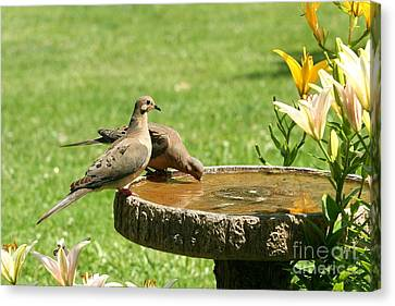 Canvas Print featuring the photograph Mourning Doves by Jack R Brock