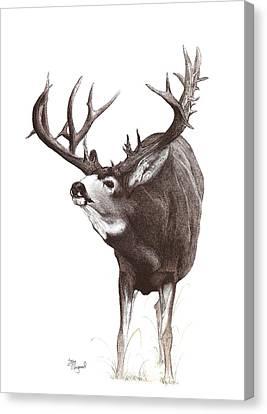 Moutain Monarch Canvas Print by Steve Maynard