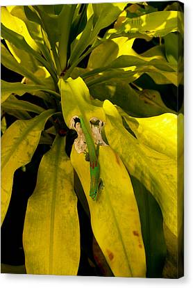 Canvas Print featuring the photograph Mr Gecko by Randy Sylvia