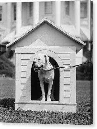 Mrs. Hardings Dog Oboy In A Doghouse Canvas Print