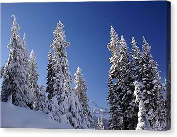 Mt. Rainier's Christmas Tree's Canvas Print by Rob Green