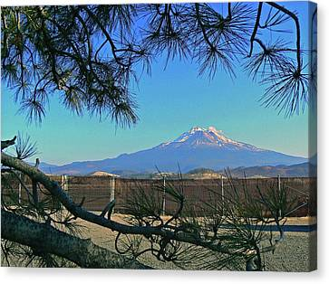 Mt Shasta At Weed  Canvas Print by Pamela Patch