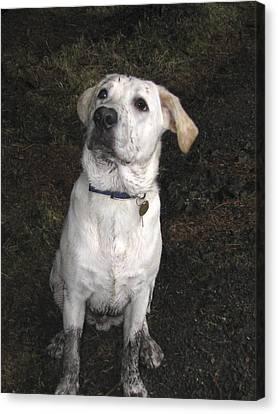 Mucky Pup Canvas Print