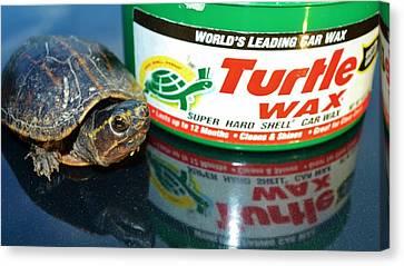 Mud Turtle Wax Canvas Print by Lynda Dawson-Youngclaus