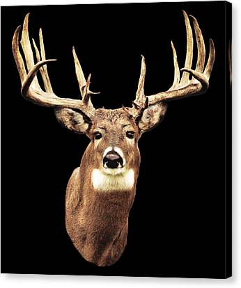Mule Deer Head Canvas Print by Walter Colvin