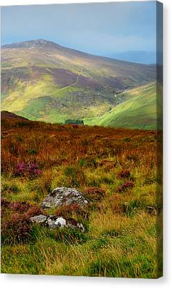 Multicolored Hills Of Wicklow. Ireland Canvas Print by Jenny Rainbow