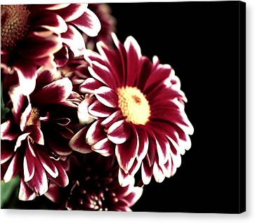 Mums In A Vase Canvas Print by Cathie Tyler