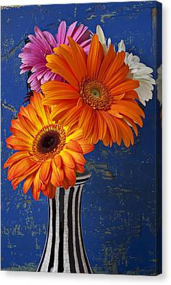 Mums In Striped Vase Canvas Print by Garry Gay