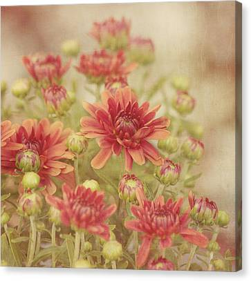 Close Focus Floral Canvas Print - Mums The Word by Kim Hojnacki