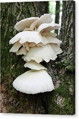Mushroom Cluster Canvas Print