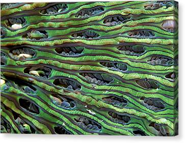 Mushroom Coral Canvas Print by Georgette Douwma