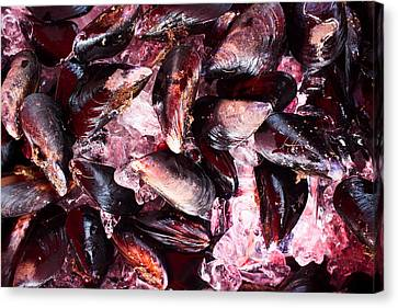 Mussels Canvas Print by Tanya Harrison