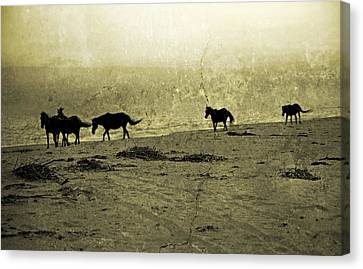 Mustangs Canvas Print by Betsy Knapp