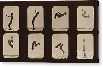 Muybridge Locomotion, Back Somersault Canvas Print by Photo Researchers