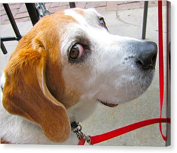 My Beagle Friend Canvas Print