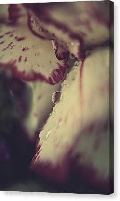 My Blood And Tears Canvas Print by Laurie Search