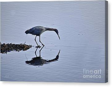 My Blue Reflection Canvas Print by Diego Re