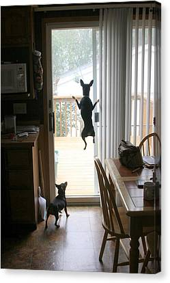 My Dog Can Fly Or Levitating Dog Canvas Print by Rick Rauzi