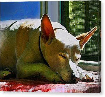 My Dog Mike Canvas Print by Debra Collins