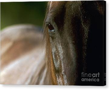Canvas Print featuring the photograph My Neigh-bor's Horse by Doug Herr