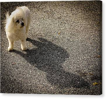 Canvas Print featuring the photograph My Shadow by Patrice Zinck