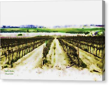 Canvas Print featuring the photograph My Well-beloved Had A Vineyard by Itzhak Richter