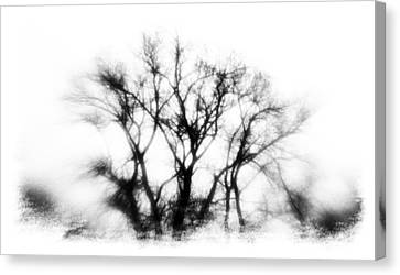 Mysterious Trees Canvas Print by David Ridley