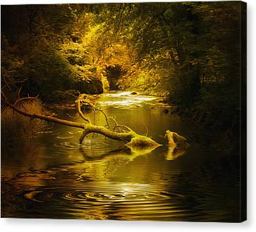 Mystery In Forest Canvas Print by Svetlana Sewell