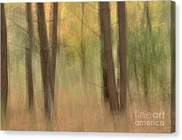 Mystery Woods Canvas Print by Tamera James
