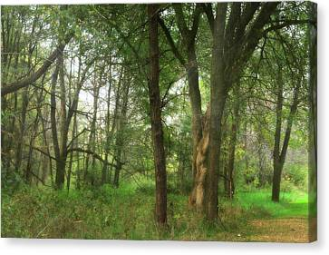 Mystic Forest Canvas Print by Scott Hovind