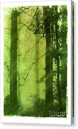 Mystical Glade Canvas Print by Judi Bagwell