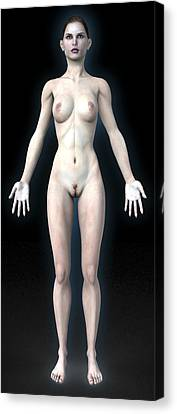 Naked Woman Canvas Print by Christian Darkin