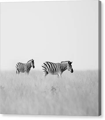 Zebra Art Canvas Print - Namibia Zebras I by Nina Papiorek