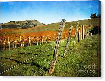 Napa Valley In Autumn Canvas Print by Ellen Cotton
