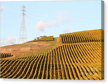 Napa Valley Vineyard . 7d9066 Canvas Print by Wingsdomain Art and Photography